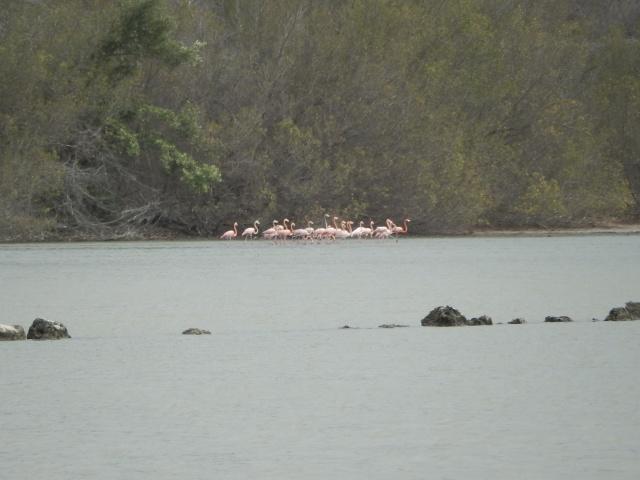 Ett försök att fånga Flamingona på bild