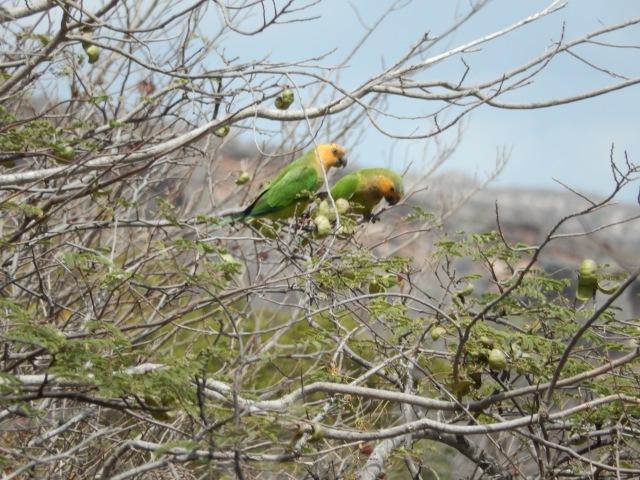 Ett av alla papegoj par vi runt omkring oss